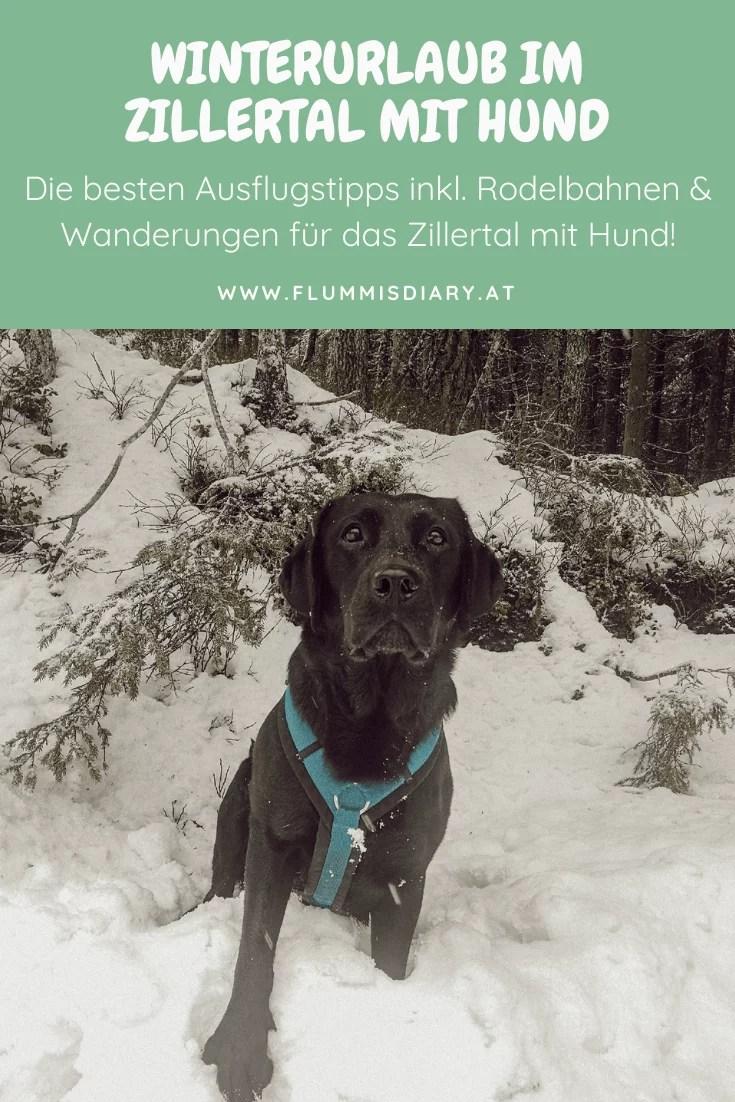 zillertal-mit-hund-im-winter-winterurlaub-erfahrung-rodeln-wandern