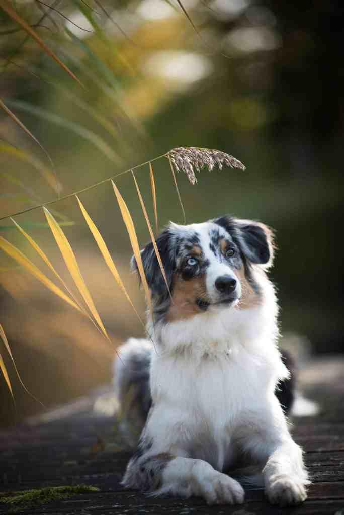 expertentipps-hundefotografie-tipps-hund-waueffekt