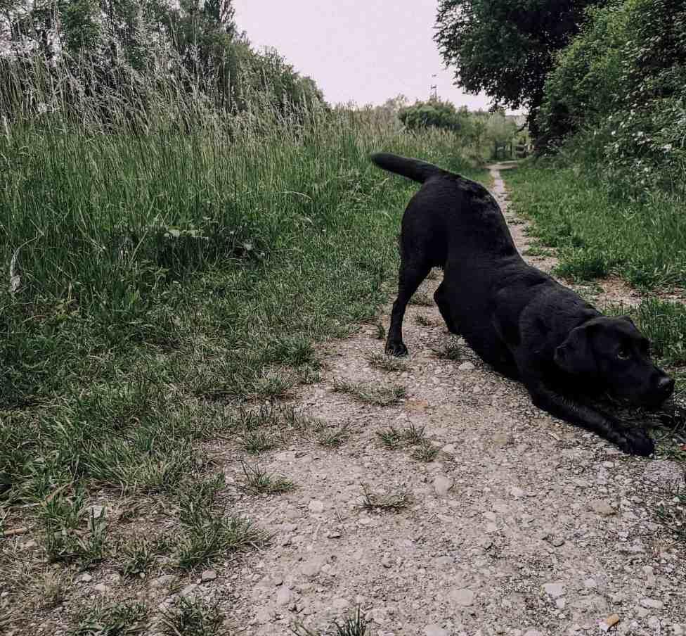 anleitung-tricksen-hund-verbeugen