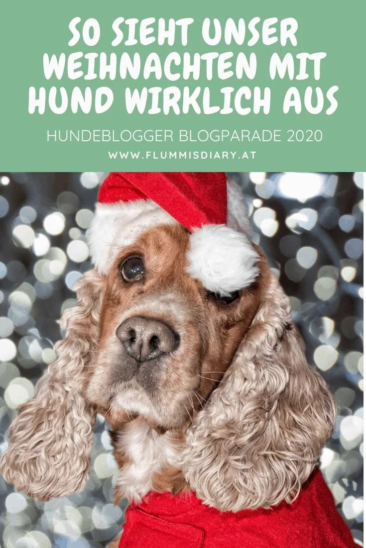weihnachten-mit-hund-blog-tipps-flummisdiary-2020