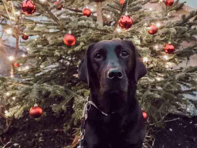 blogparade-weihnachten-mit-hund-hundeblog