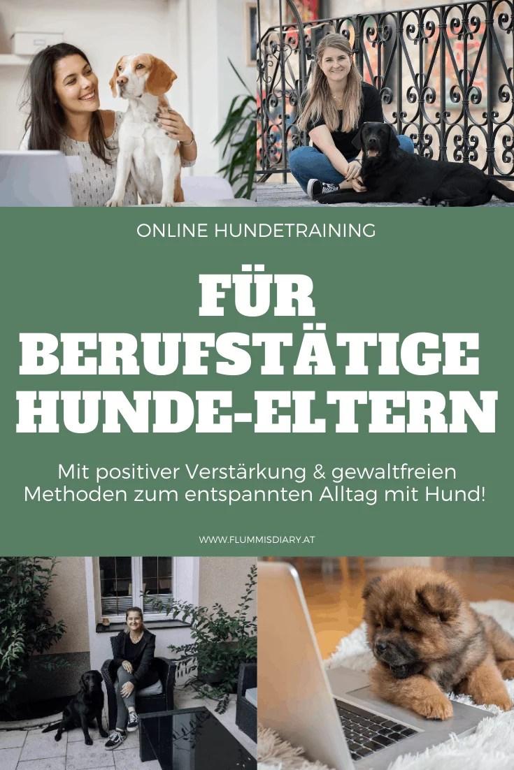 hundetrainer-hundeschule-fuer-berufstaetige-job-karriere-hund-online