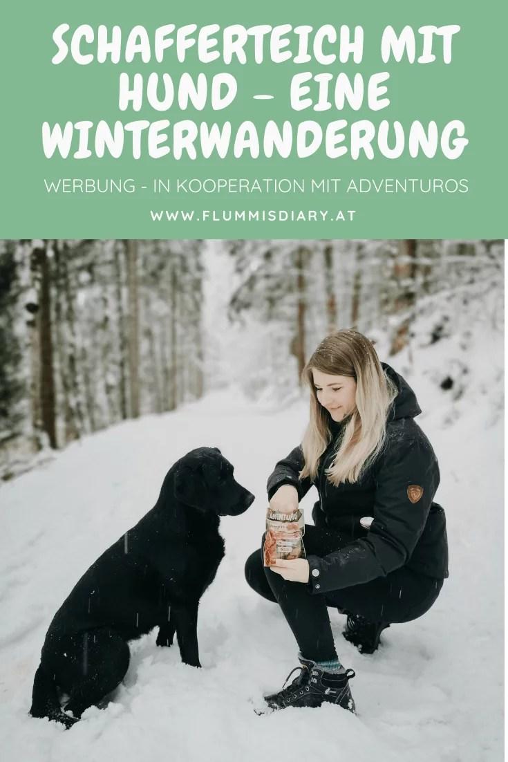 schafferteich-hund-winter-adventuros-wandern-in-oberoesterreich
