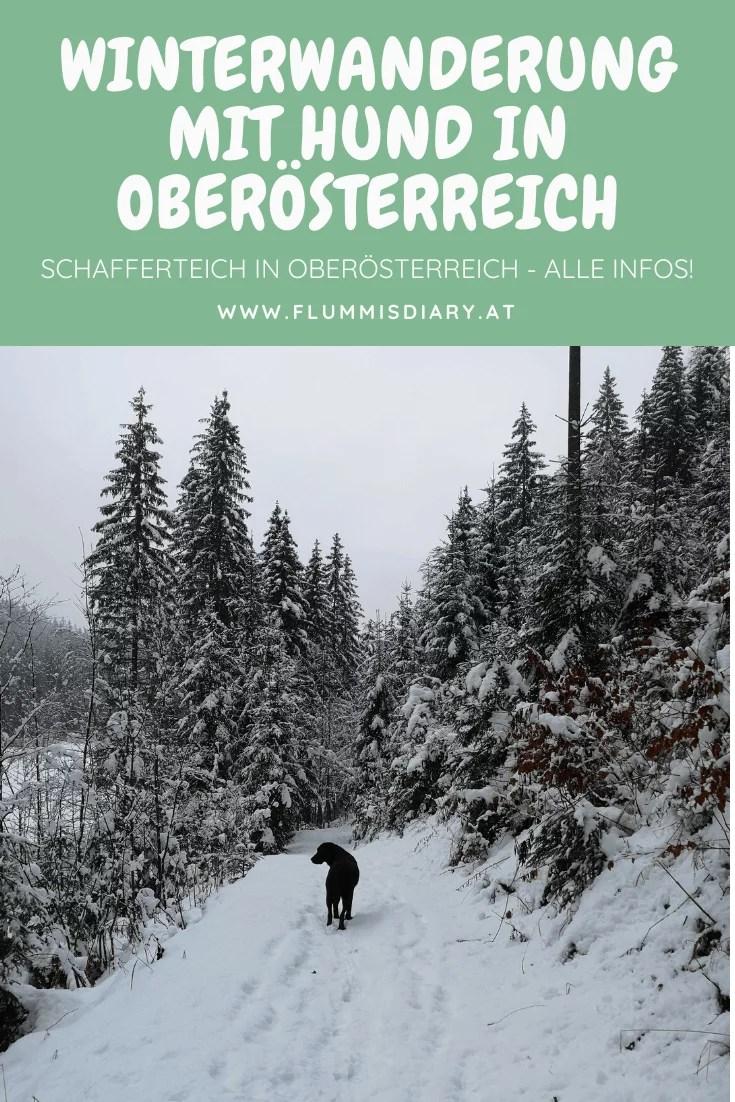 schafferteich-hund-winter-wandern-in-oberoesterreich