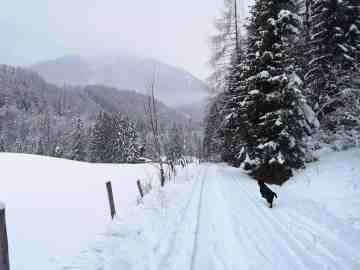 schafferteich-mit-hund-winter-wanderung