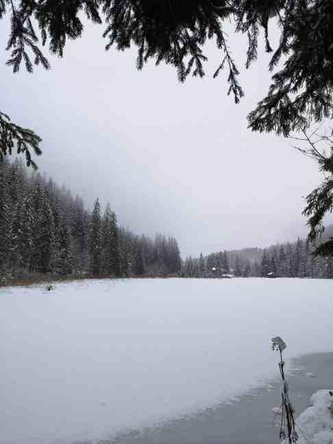 schafferteich-mit-hund-winter-wanderung-adventuros