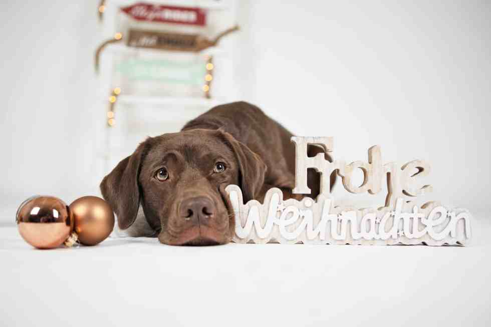 weihnachten_mit_hund_tipps-1