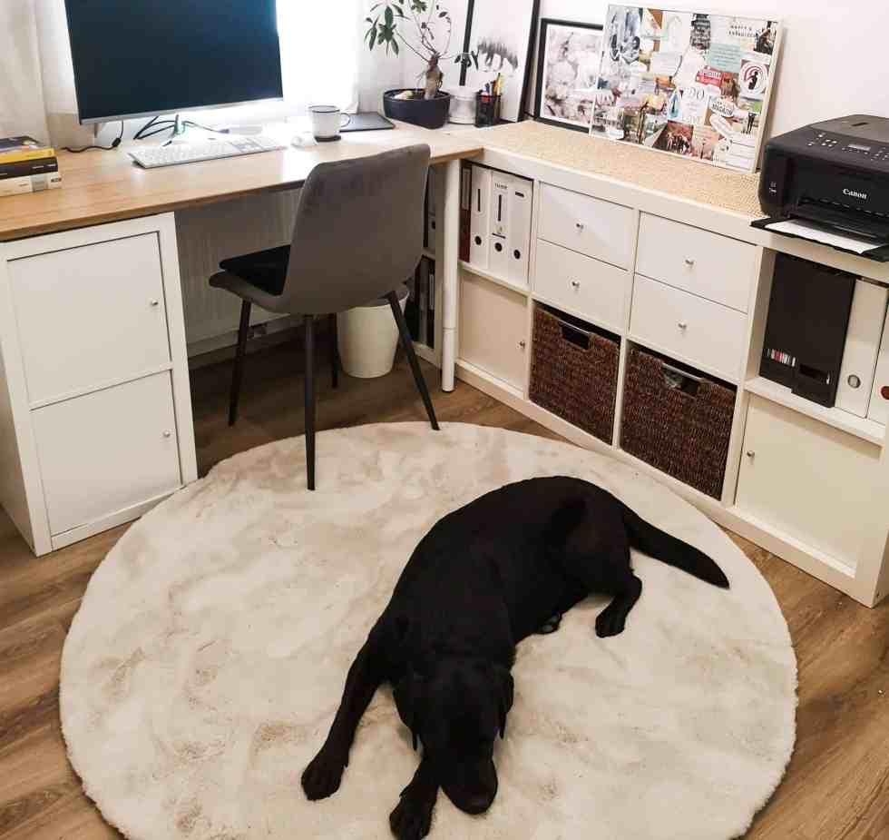 arbeitszimmer-mit-hund-home-office-hunde