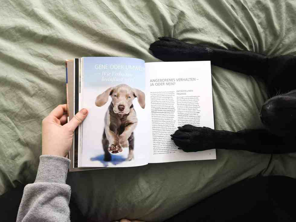 verhaltensbiologie-fuer-hundetrainer-buch-review