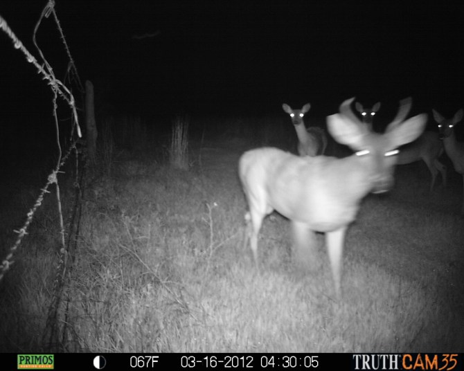 Things That Go Bump (On The Ranch) In The Dark.