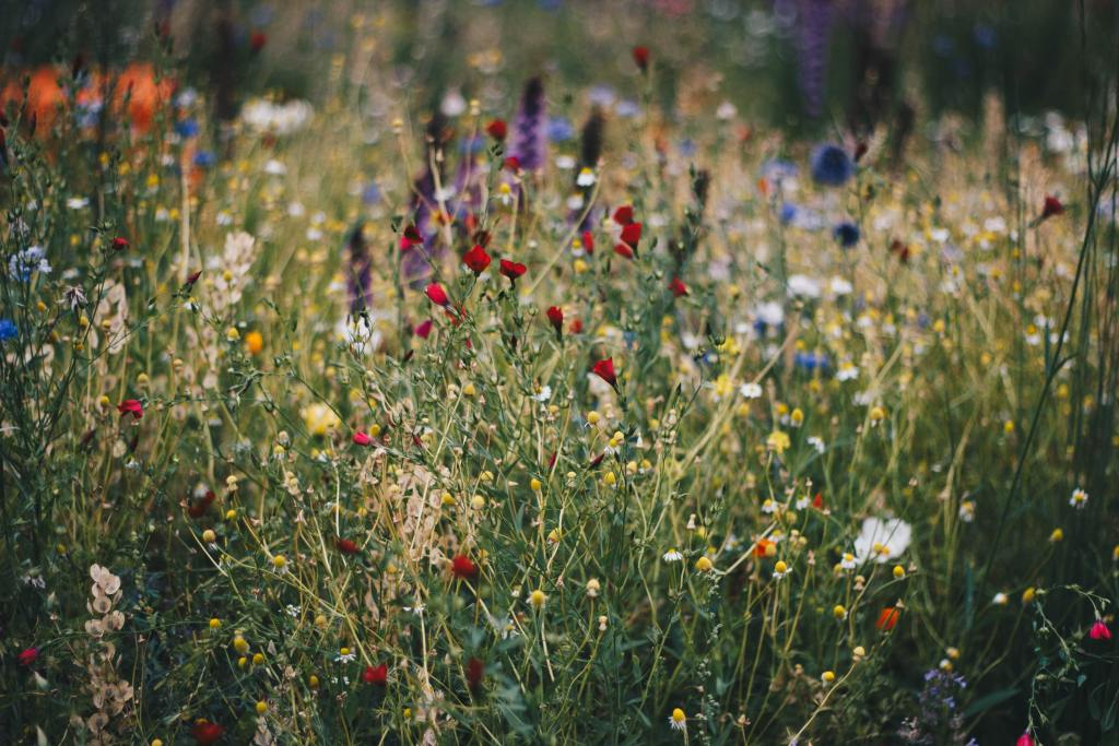 Native Plants: Country kid skills