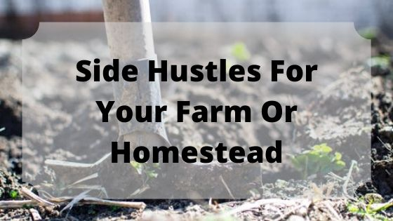 Homesteading Side Hustles