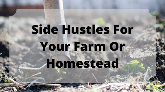 Homestead side hustles