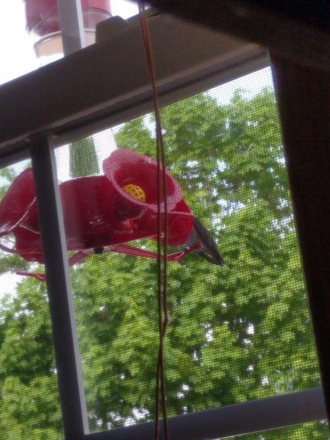 Prepare for hummingbirds: hung feeder