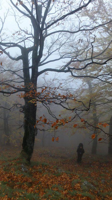 Crovurile din Valea Cernei