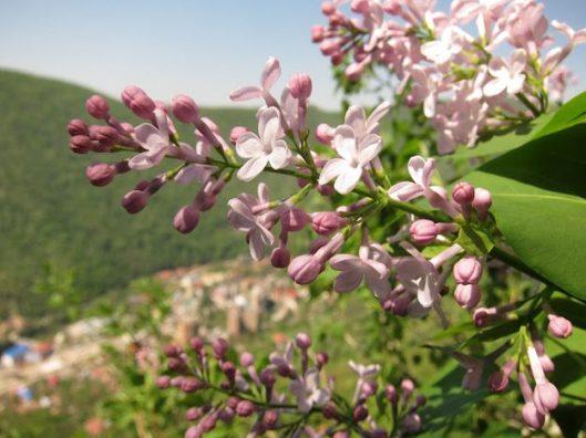 traseul katharsis, alpinism muntii mehedinti