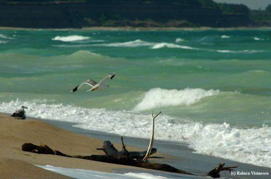 plaja Shabla in Bulgaria