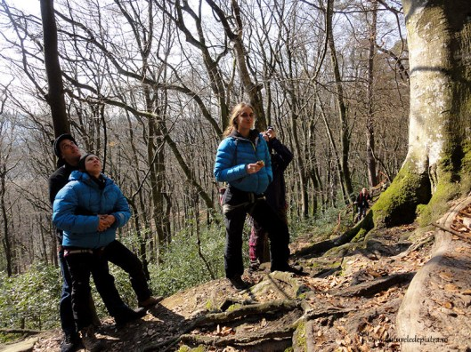 Berdorf forests climbing