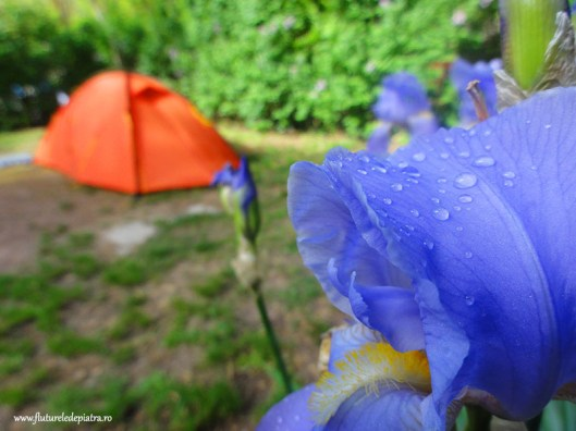 cort camping munte sainte victoire franta