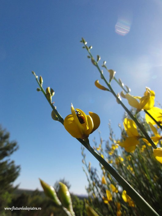 sunny flowers, aix en provence