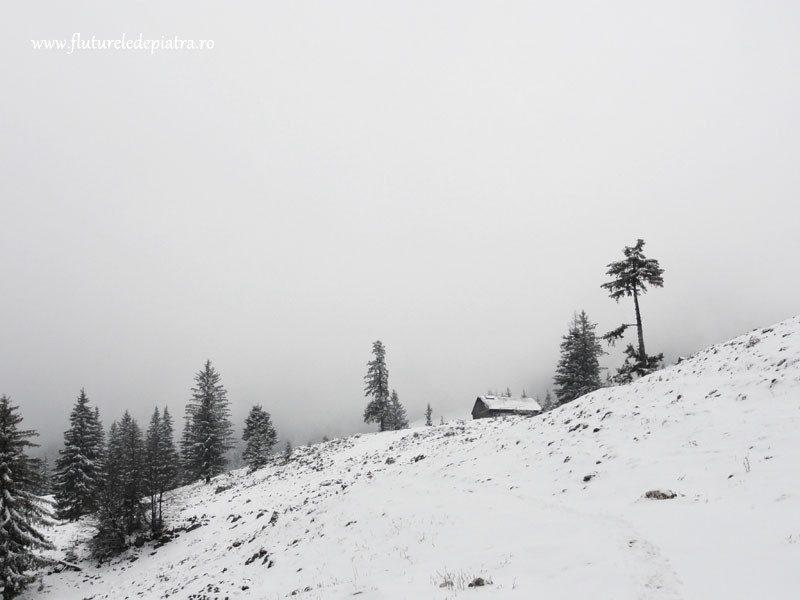 iarna in poiana zanoagei piatra craiului