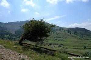 vegetatie din muntii macin