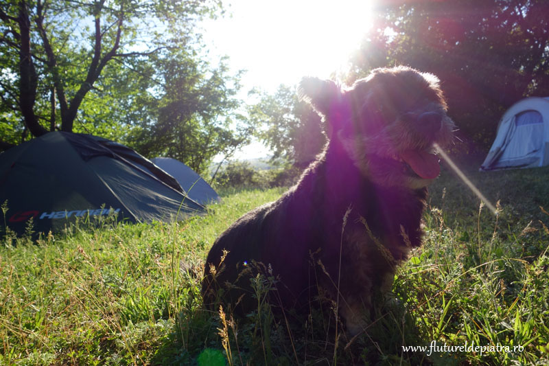camping muntii macin
