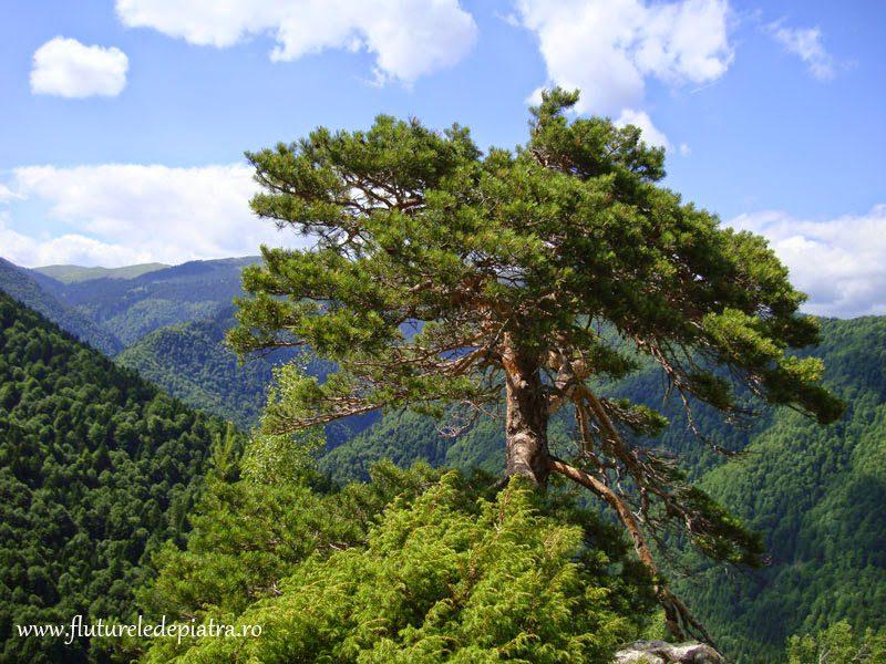 peisaj alpinism buila-vanturarita
