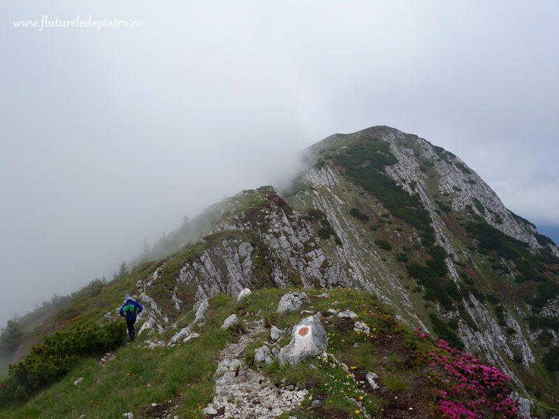 vara in muntii carpati, romania