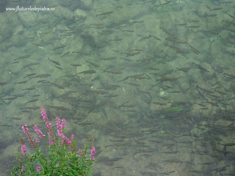 parcul national krka_croatia (19)