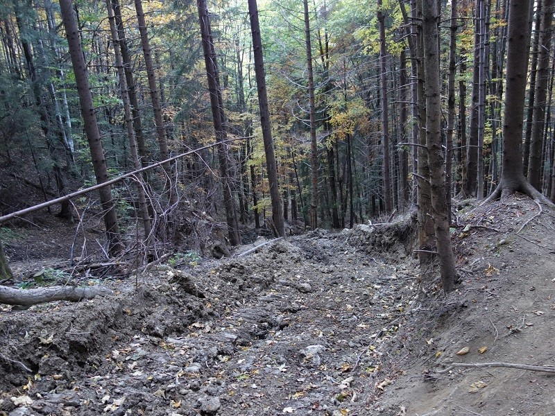 cabana diham exploatare forestiera padure