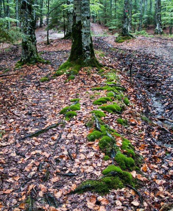 mușchi prin pădurile din Munții Ciucaș, spre Creasta Zăganu-Gropșoarele