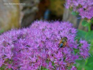 fauna și flora buila vânturarița