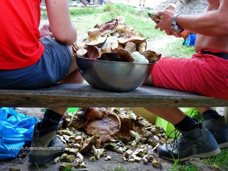 curățat de ciuperci la Cabana Cheia, Buila Vâturarița