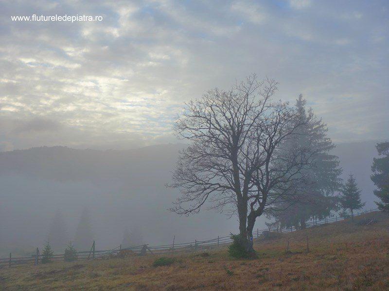 cețuri printre copaci, munții călimani, 12 apostoli