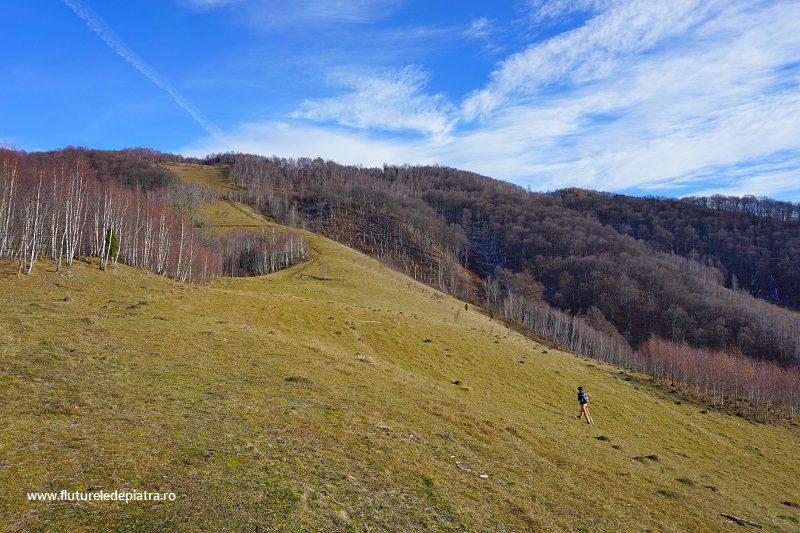 urcare pe pășunile din Scărița Belioara