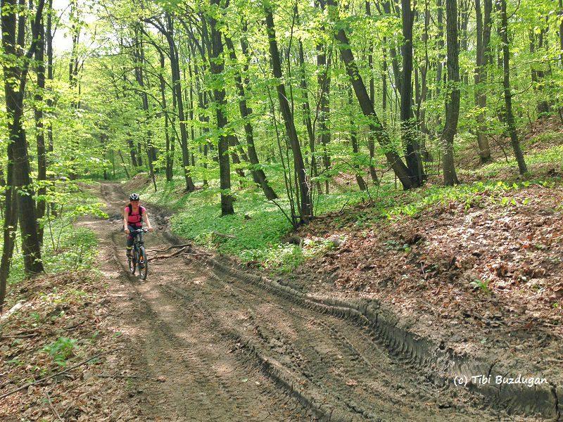 pe drumurile forestiere din Sărata Monteoru, Buzău mountainbike XC race traseu