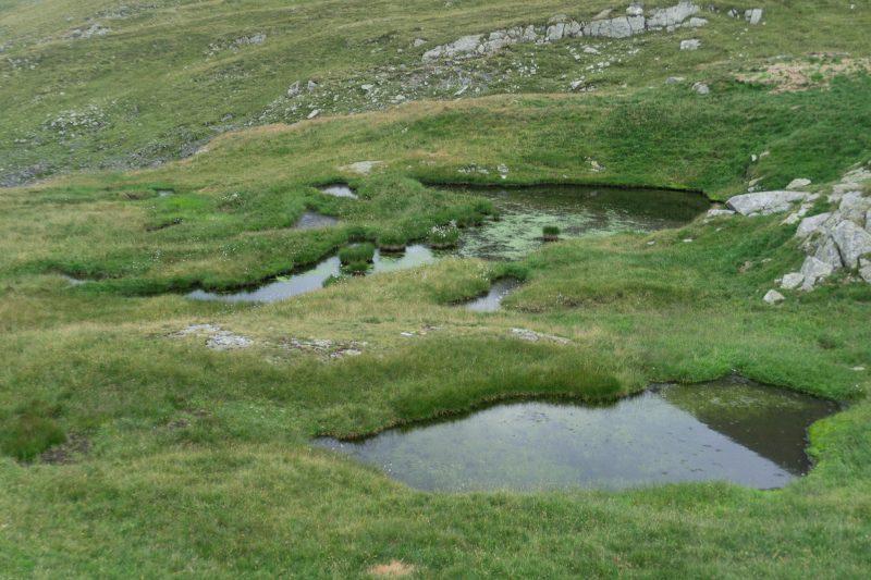 zonele inundate din căldare, insule de vegetație sub Vârful Modloveanu