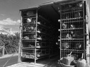 închisoare de găini, Leonidio, Grecia