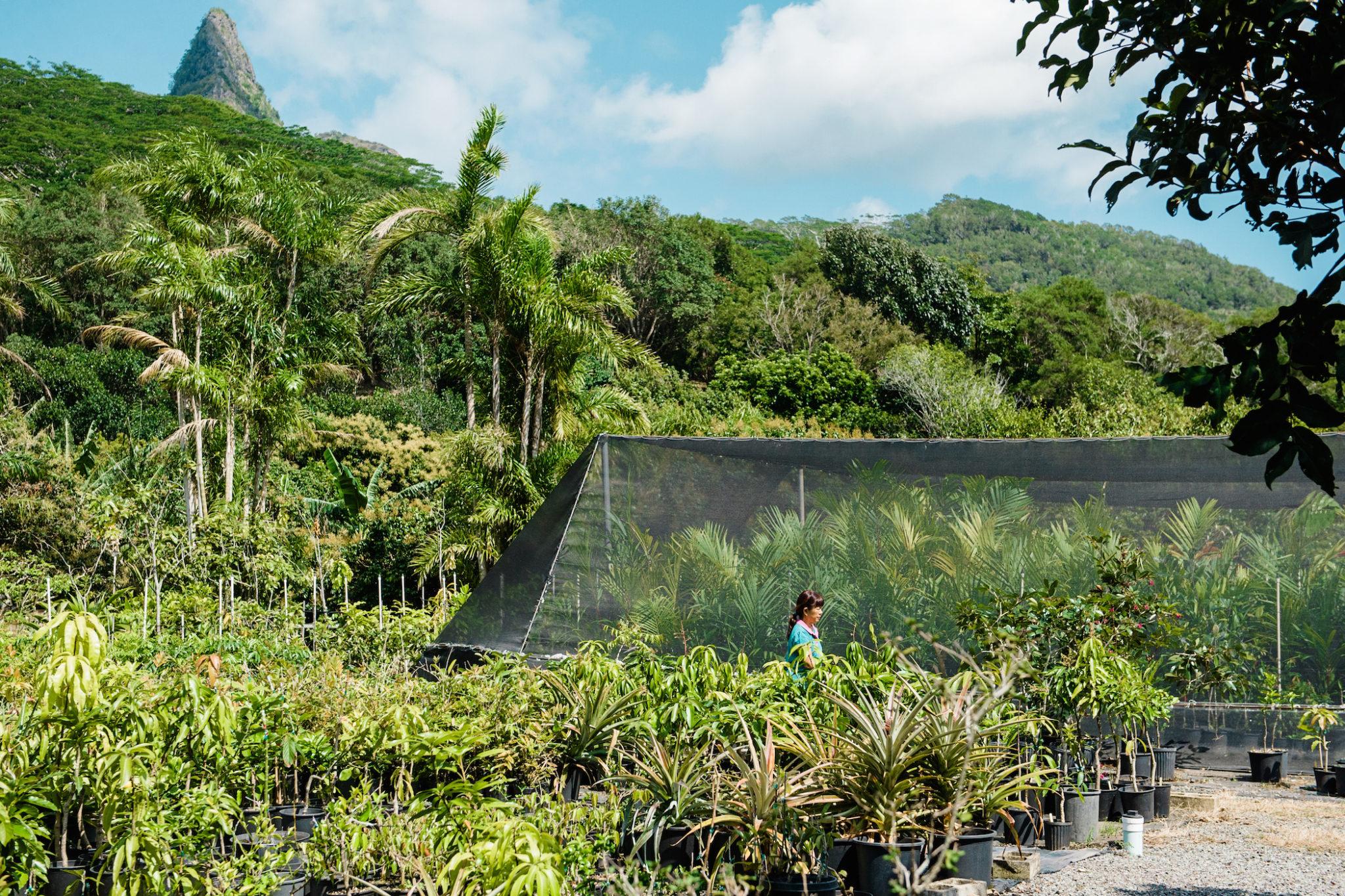 Frankies Nursery FLUX Hawaii