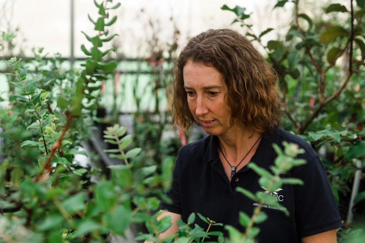 Lisa Keith ʻOhiʻa Plant Detective of Disease