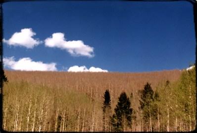 """Tree Line"" 1995, Sangre De Christo Mountains, Santa Fe, New Mexico, Landscape/Light studies series, C–print"