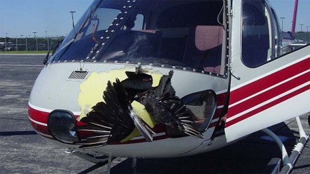 Impacto de un ave de gran tamaño con un helicóptero.