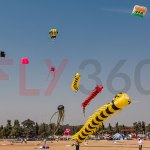 Different kites - Kite Flying Show & Event