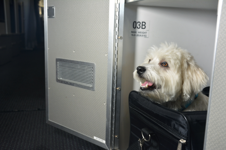 American airlines 39 new first class pet cabins fly dine for Best airline to fly dogs