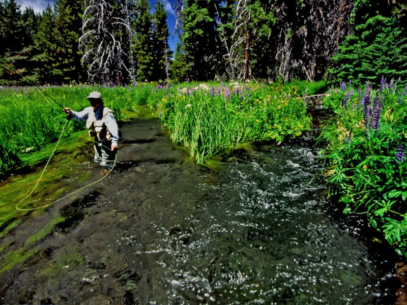 Small streams the fly fishers place for Small creek fishing