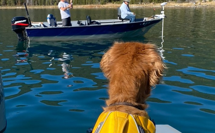 a dog overlooking a boat on paulina lake