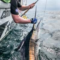 Sailfish On A Classic Fin Nor Fly Reel and Some Questions About Fly Fishing in Rompin