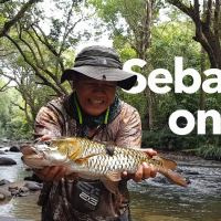 Video - Fly fishing for mahseer and Aznir lands a monster jungle perch