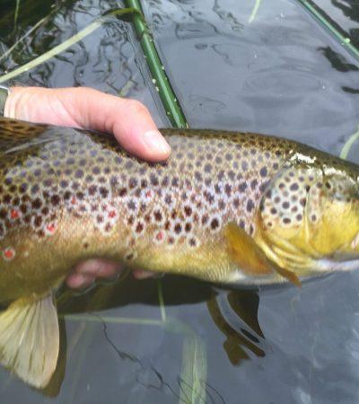 Micro CDC dry flies for big fish